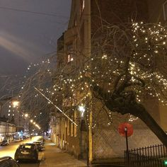 Finland, Christmas Tree, Holiday Decor, Outdoor, Home Decor, Teal Christmas Tree, Outdoors, Decoration Home, Room Decor
