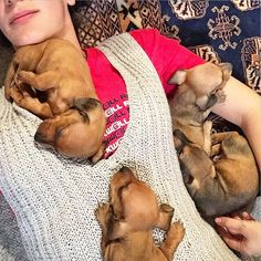 """1,605 Likes, 81 Comments - Dachshund World!® (@thedoxieworld) on Instagram: """"⬇⬇⬇ Check the link in my profile and choose your Dachshund shirt or hoodie! International…"""""""