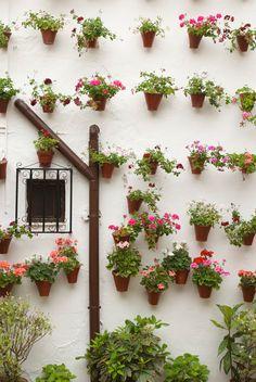 Plantas indicadas para jardins verticais:  • Alpinia • Orquídea • Chifre-de-veado • Peixinho • Samambaias