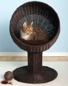 Cool Furniture For Pets. My cats would SO love that. I guess their coming with me to my dream house