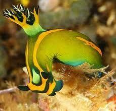 Resultado de imagen para beautiful sea snails
