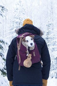 Dogs that hike, travelling with dog. Cutest JRT puppy in a backpack. Outdoor adventures with doggo.
