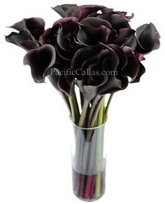 Hot Chocolate Callas were one of my wedding flowers :) my fav! Black Calla Lily, Calla Lily Flowers, Calla Lillies, Dark Purple Flowers, Deep Purple, Floral Wedding, Wedding Flowers, Chocolate Pictures, Autumn Wedding