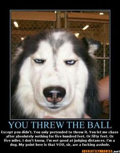 i do that to my dog...