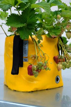 Easy way how to grow your own strawberries Urban Planters, Grow Your Own, Green Bag, Strawberries, Bloom, Pockets, Wall, Plants, Design