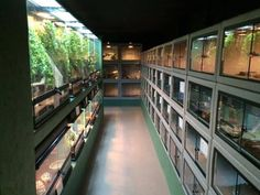 Enclosures at Reptile Rapture's new store in Monona, Wisconsin