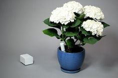 """My plants always seem to """"kick the bucket!"""" With this new device, the plant will let you know it's needs and reminders will be sent to your smart phone... Yay, my plants will live forever... I hope :)"""