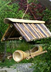 Bamboo Giant Nursery featuring exotic bamboo for retail and wholesale. Supplies and services for installing whole groves, privacy hedges or single plants. Pvc Pipe Projects, Three Birds, Bamboo Furniture, Bird Boxes, Large Table, Birdhouses, Bird Feeders, Bali, Exotic