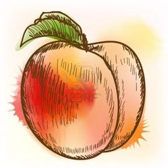 Find Vector illustration of vintage peach Stock Images in HD and millions of other royalty-free stock photos, illustrations, and vectors in the Shutterstock collection. Peach Blossom Tree, Peach Blossoms, Peach Tattoo, I Tattoo, Painting & Drawing, Watercolor Paintings, Rock Painting, Watercolors, Draw Dividers