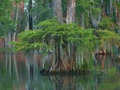 University of Louisiana at Lafayette swamp