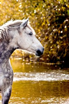 Dapple Grey Horse @ the River