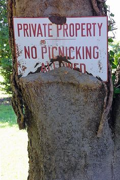 Yeah, no picnicking allowed!  - besides, the trees might eat your lunch!