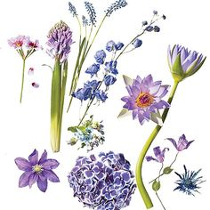 Our favorite flowers from the pale violet to electric blue spectrum.