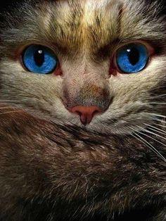 Olhos azuis...lindo! — Catmoji