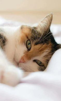 Saturday sleep-in.