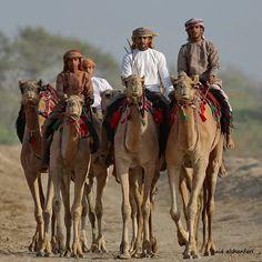 Camels Riders _Oman Photo : Said Ashanfati