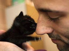 cute rescued black kitten kisses nose