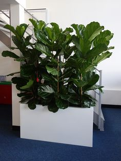 Indoor Garden Design provides office plants and office landsaping businesses & events across North London & Central London. Indoor Trees, Indoor Plants, Interior Exterior, Exterior Design, Indoor Garden, Garden Plants, Long Planter Boxes, Garden Privacy, Decorative Planters