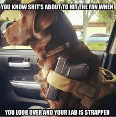 Funny Animal Pictures Of Today - Animal Jokes, Funny Animal Memes, Dog Memes, Funny Animal Pictures, Cute Funny Animals, Funny Dogs, Cute Dogs, Funny Memes, Hilarious