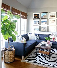 12. Fiddle Leaf Fig.  Fiddle leaf fig is a tough houseplant. Its large leathery foliage and height create a statement in the drawing room. To learn more about fiddle leaf, read our guide.