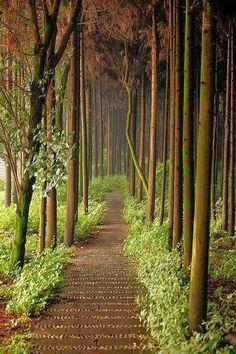 Forest Path, Chengdu, China http://exploretraveler.com