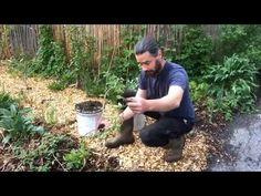 Hardy Kiwi - Easy Propagation Technique - YouTube