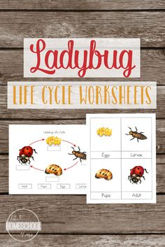 FREE Ladybugs Worksheets for kids learning about ladybug life cycles in science. Includes Lady bug Lifecycle chart, ladybut vocabulary and more. Perfect for toddler, preschool, prek, kindergarten, first grade, second grade, third grade for summer learning, homeschooling, classroom, and after school.