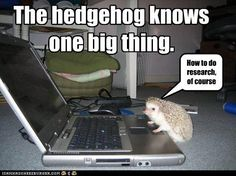 The hedgehog knows one big thing.