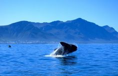In Pictures: People at the Hermanus Whale watching Festival captured the beautiful moments