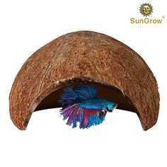 SunGrow Betta cave: Natural habitat made from coconut shells: Soft-textured smooth edges & spacious hideout for Betta fish to rest and breed: Maintains water quality and pH levels Betta Fish Toys, Pet Fish, Betta Tank, Fish Tank, Fish Breeding, Best Places To Camp, Pocket Pet, Siamese Fighting Fish, Animal Habitats