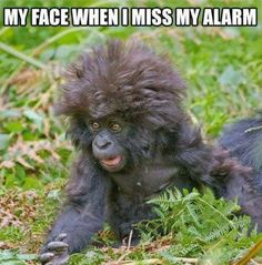 That moment of panic when you know you have slept through your alarm. #Monday