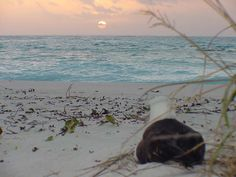 Gooney_SunSet Midway Atoll, Beautiful Places To Live, Islands, Tours, Sunset, Landscape, Beach, Pictures, Outdoor
