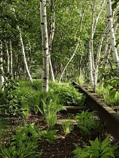High Line NYC: The Inside Story by Landscape Designer Piet Oudolf