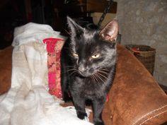 Le réveil de Salomée #chat #cat #chambredhote #bandb #cute #mignon #tarn #castelnaudemontmiral #gaillac http://lamaisonduchai.com/accueil.html