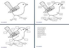 Nomenclature Montessori per le parti dell'uccello – Lapappadolce
