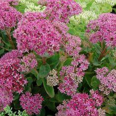 Balkon-Blumen: Retter für Bienen, Hummeln und Schmetterlinge. Liste für Bienenweiden und Futter für unsere Bestäubungsinsekten.