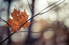 Nature photography muted fall autumn leaves by LightReadingPhotos, $30.00