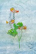 "New artwork for sale! - "" Crocosmia Schwertliliengewaechs  by PixBreak Art "" - http://ift.tt/2mddcVh"