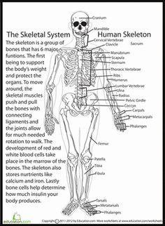 Printables 5th Grade Science Printable Worksheets biology anatomy and student centered resources on pinterest fifth grade life science worksheets human skeletal system worksheet