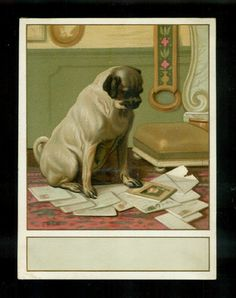 Handsome Pug Dog Reads His Mail-1880s Victorian Trade Card