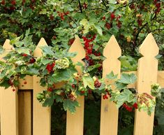 Sitting On The Fence, Cute Cottage, B & B, Seasons, Red Currants, Holiday, Plants, Allotment, Sweden