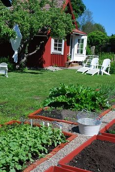neat garden with red raised beds