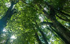 Recuperar as florestas do Brasil custaria R$ 52 bilhões em 14 anos Estudo inédito avalia quanto custa regenerar as florestas cortadas ilegalmente na Amazônia e Mata Atlântica. Quem vai pagar a conta?