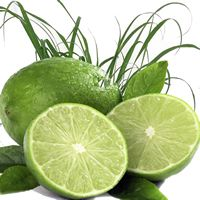 LIME CITRONELLA Candle Soap Making Fragrance Oil