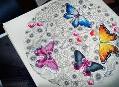 Butterfly  Millie Marotta Coloring Book/ Animal Kingdom Book/ Reino Animal Livro de Colorir/ Borboletas