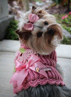 Pretty in Pink (Owned by Yorkies) Yorkshire Terrier Puppy Dogs