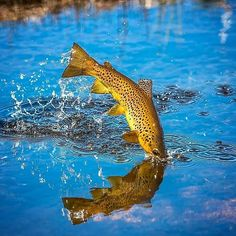 "FlyFishing - This stunning capture from blew me away! – ""In the pursuit of magic moments ,I - Fly Fishing For Beginners, Fly Fishing Tips, Fishing Life, Gone Fishing, Trout Fishing, Bass Fishing, Country Girl Tattoos, Quote Tattoos Girls, Tattoo Quotes"