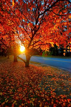 Raleigh in the fall. i am so excited to see this :)