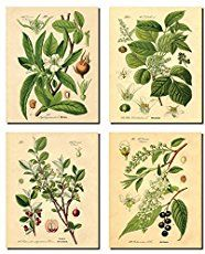 Learn where you can download free botanical prints and create your own works of art for yourself or for gifts. Easy to frame and to make cards from.