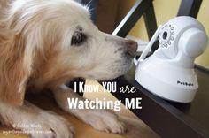 Watching Your Pet Online